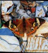 Painting Butterfly