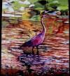Great-purple-heron